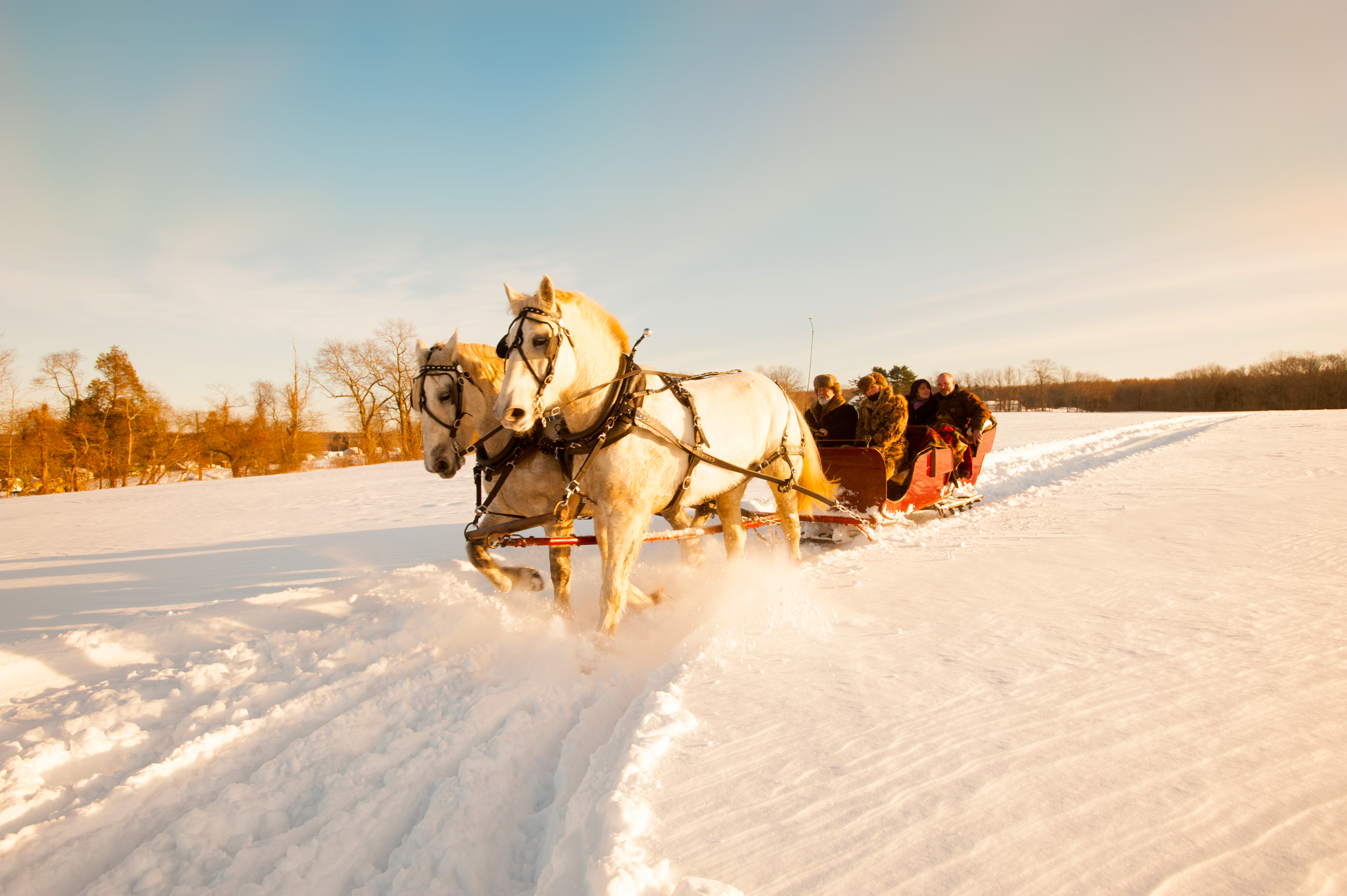 Sleigh Rides In Connecticut Visit Ct