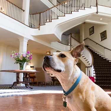 Dog Friendly Motels Mystic Ct