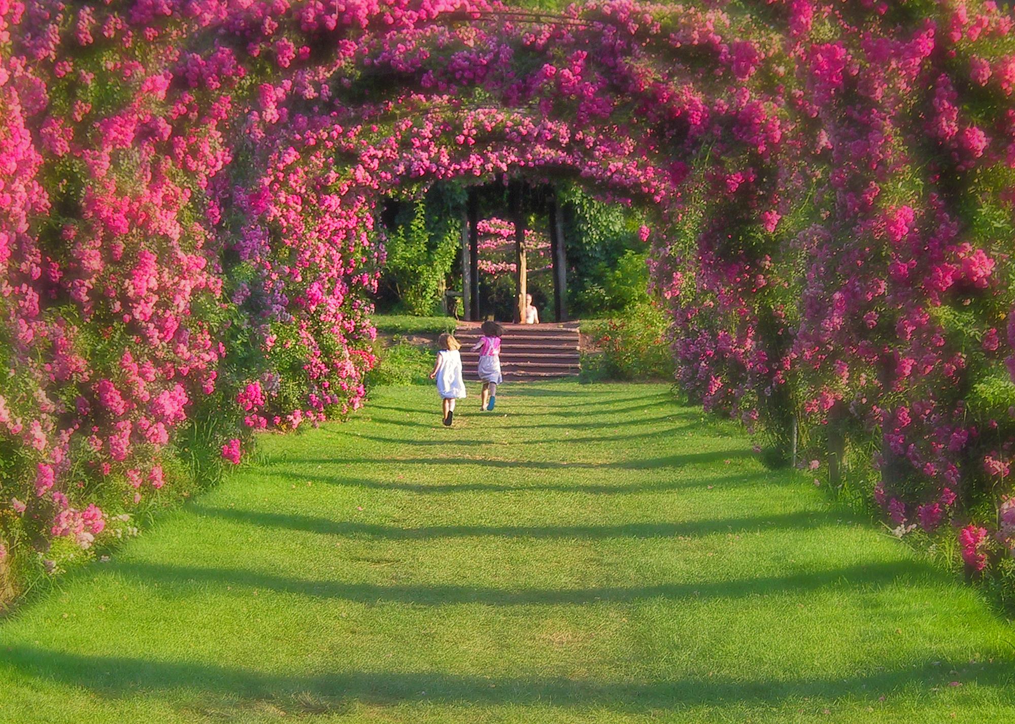 огромный розовый сад картинки будет стоять столе