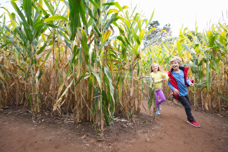 Corn Mazes Visit Ct