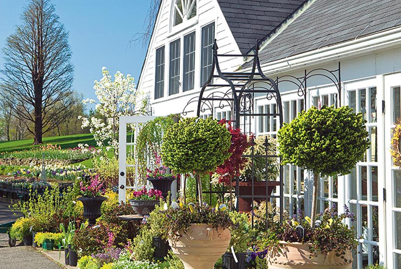 White Flower Farm Visit Ct
