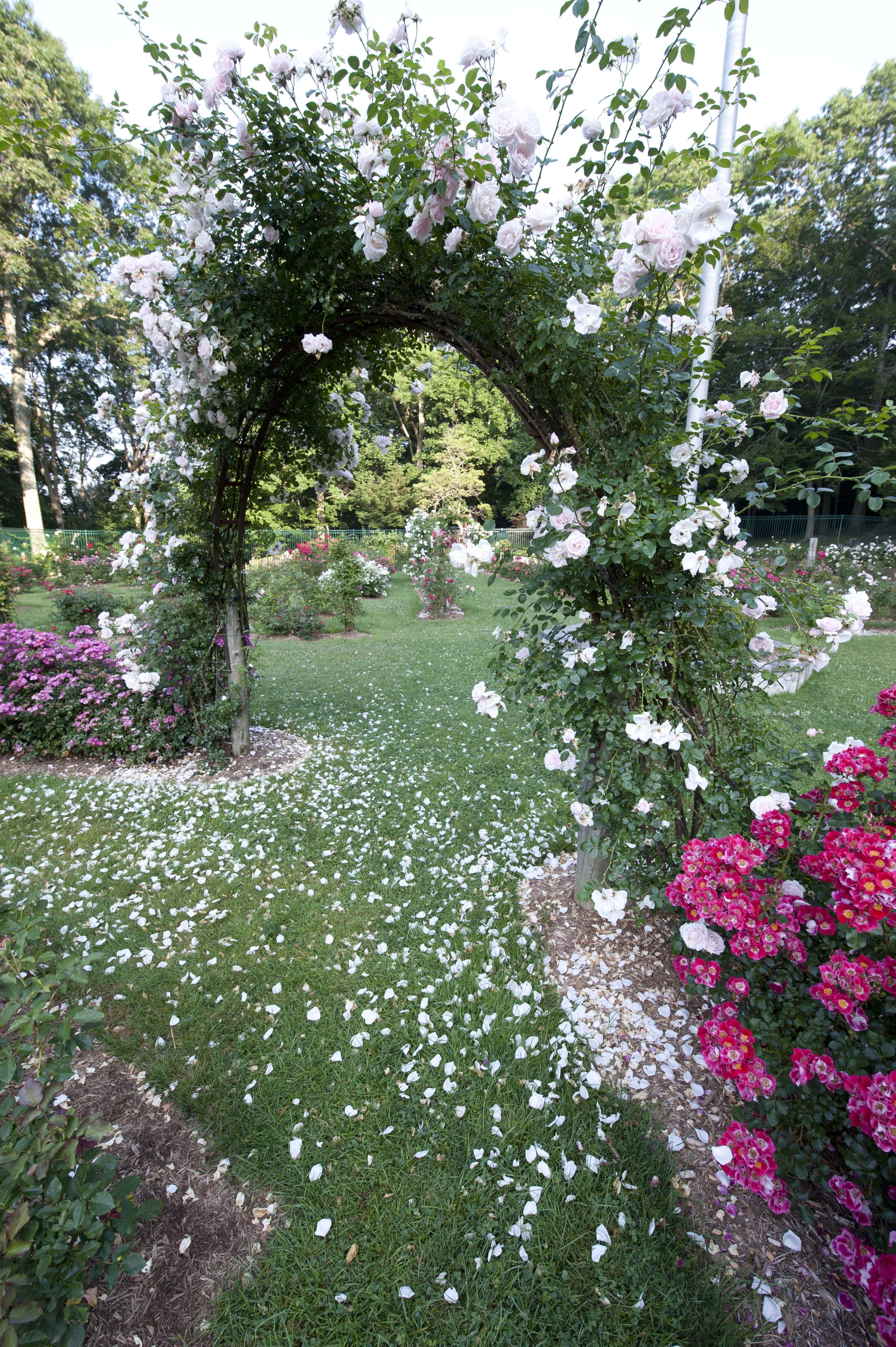 Mohegan Park Amp Memorial Rose Garden Visit Ct