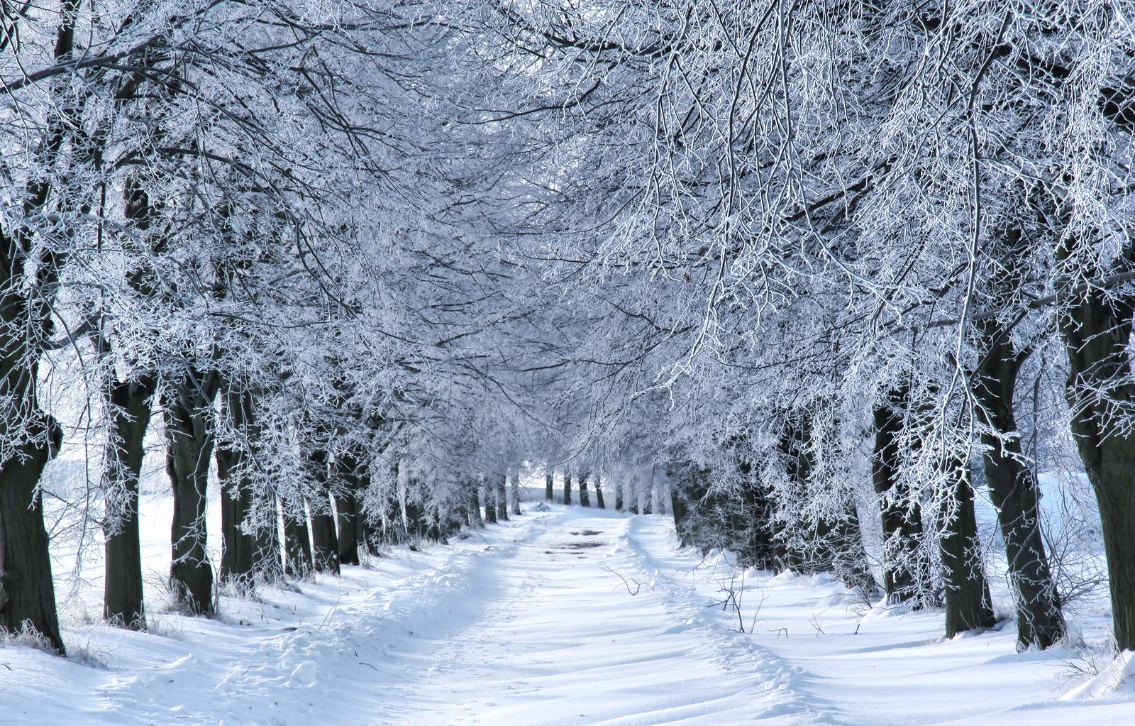 Winter Wonderland Package Visit Ct