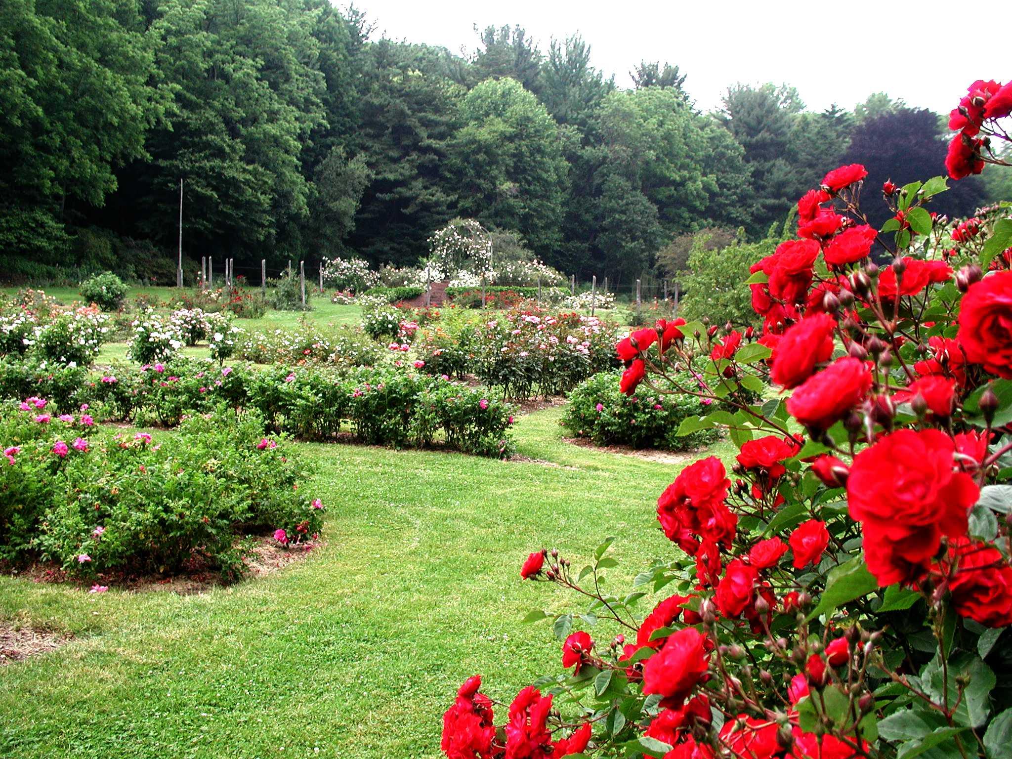 Pardee Rose Gardens Visit Ct