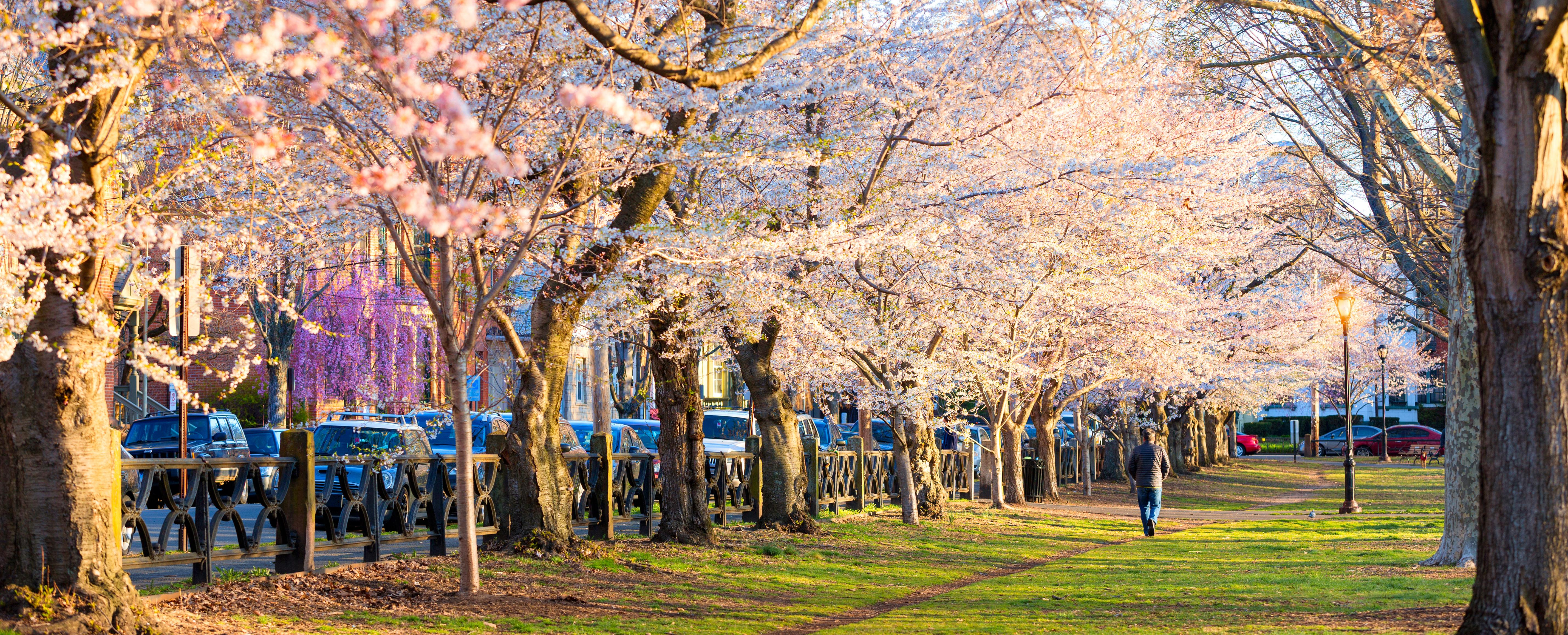 Connecticuts Spring Blossom Finder Visit Ct