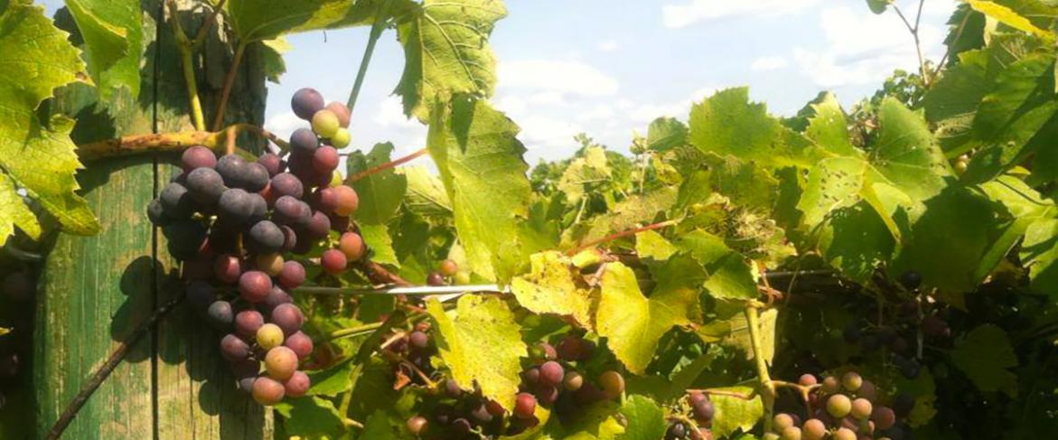 DiGrazia Vineyard & Winery