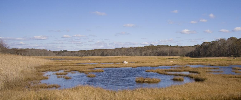 Barn Island Wildlife Management Area