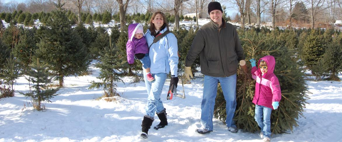 Uncle Frank's Christmas Tree Farm