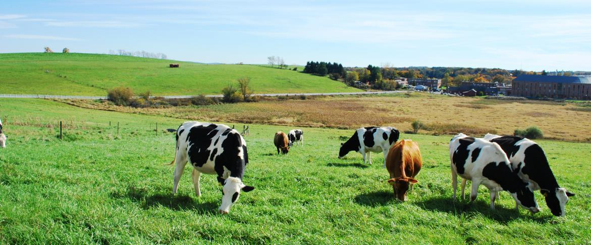 University of Connecticut Animal Barns Self-Guided Tours