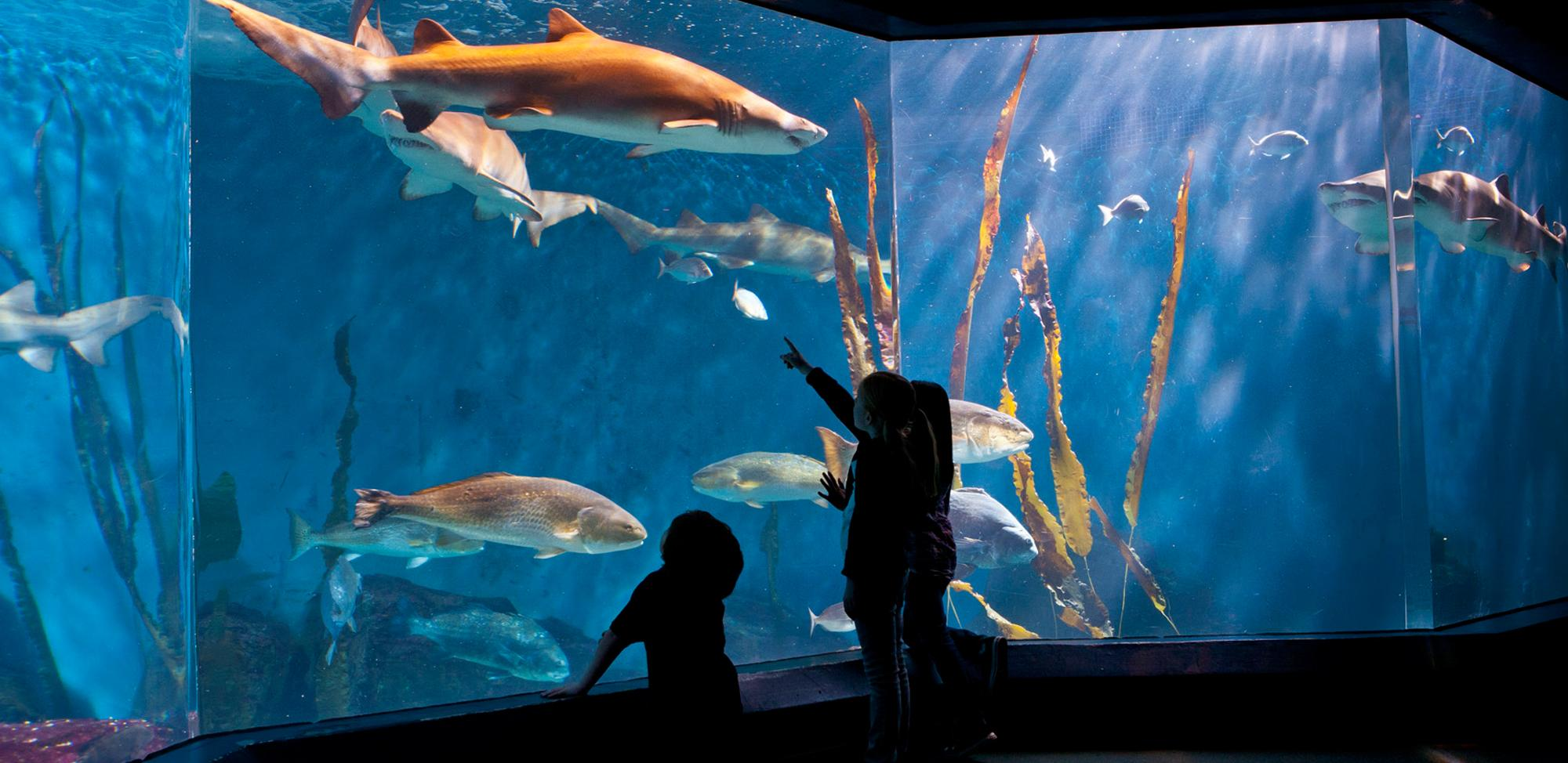 The Maritime Aquarium at Norwalk