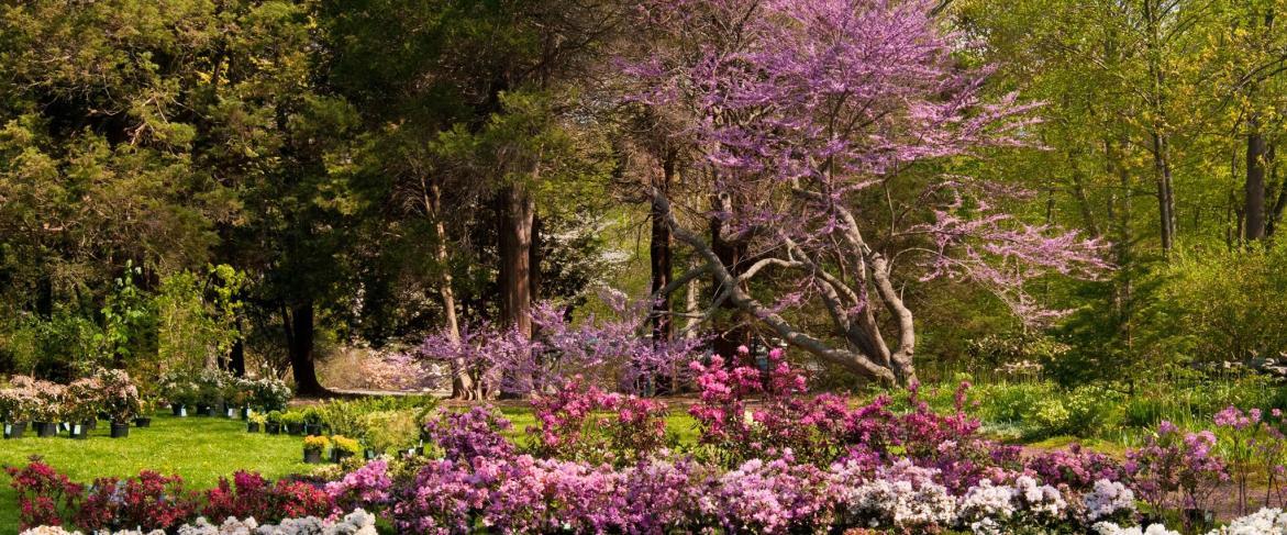 Bartlett Arboretum & Gardens