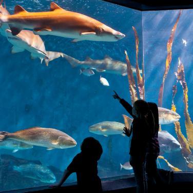 The Maritime Aquarium At Norwalk Visit Ct